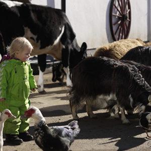 Husdyrpark barn sammen med dyr