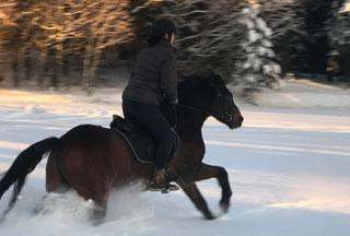 galopp i snøen ponni ridetur
