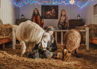 julekrybbe med levende dyr