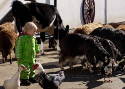 Barn blant dyr på tunet