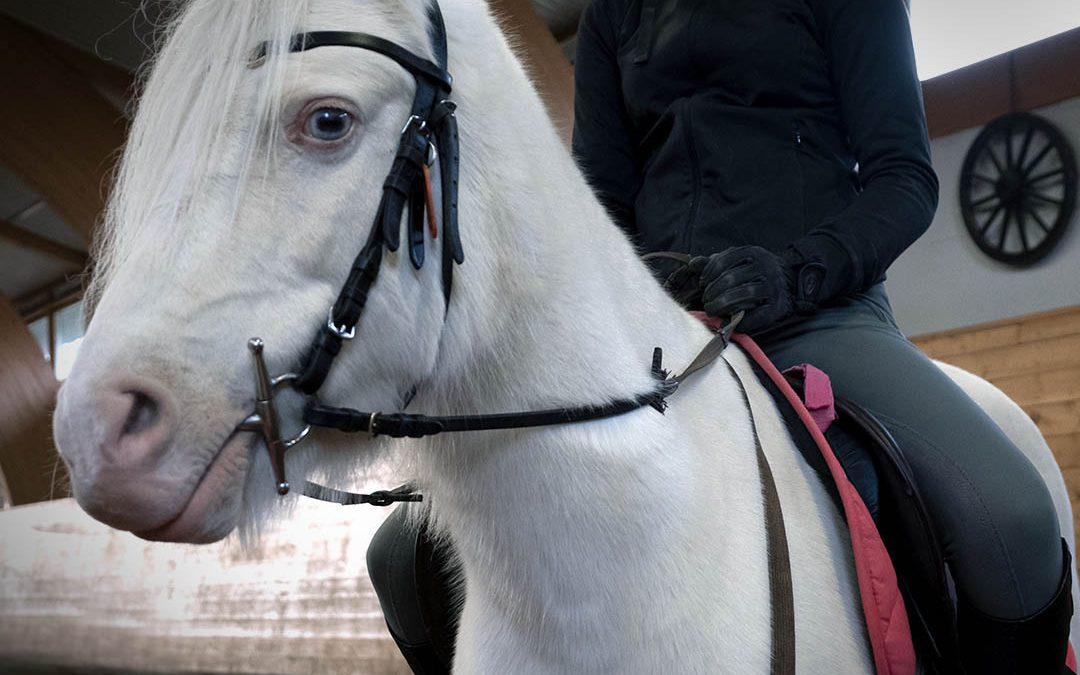 Informasjon fra rideskolen under Coronakrisen