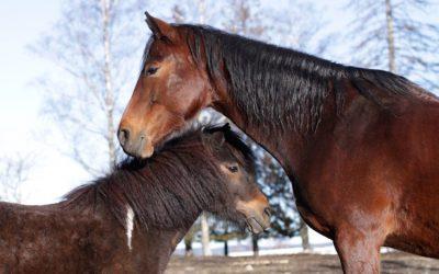 Kronerulling for mat og stell til dyrene på EKT