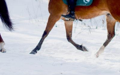 Ekstra ridetilbud i vinterferien 2021